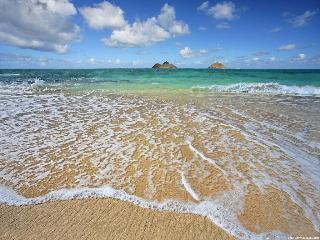 Органический мир мирового океана